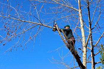 obrezovanje žaganje dreves